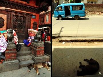 Zdjęcia z podróży do Nepalu - bezpańskie psy