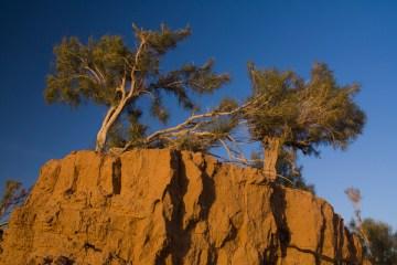 Zdjęcia z Mongolii - pustynia Gobi