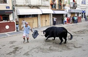 Torreador amator w ulicznej walce z bykiem