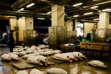 Aukcje tuńczyków w Japonii