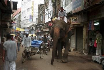 Słoń w dzielnicy Paharganj w Delhi
