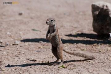 Safari w Afryce - podróż do Namibi
