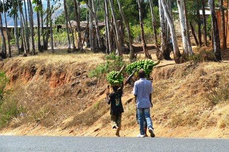 Banany w Burundi