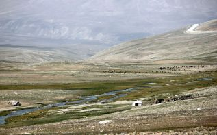 Wypad bydła w Pamirze
