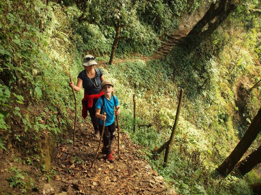 Las w Himalajach - zdjęcia z trekkingu Mardi Himal