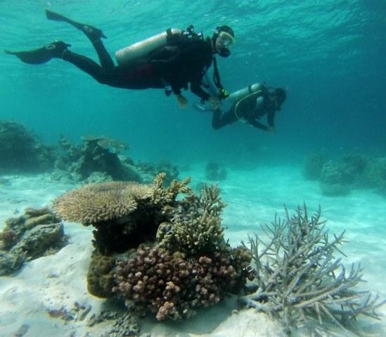 Nurkowanie na Borneo, ratowanie raf, praca w TRACC