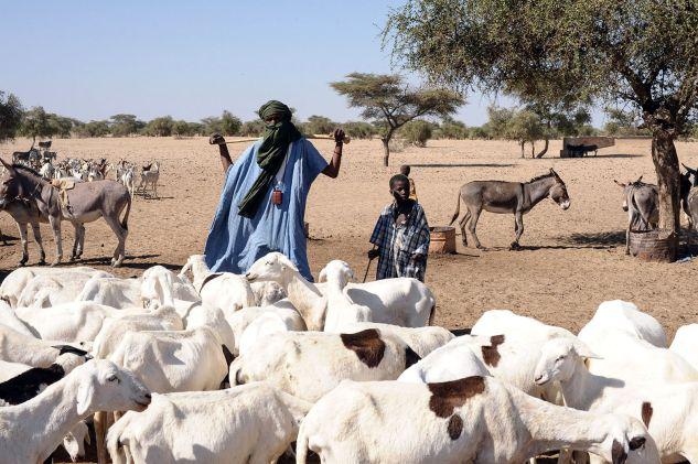 Tuaregowie na Saharze, zdjęcia z podróży do Mali