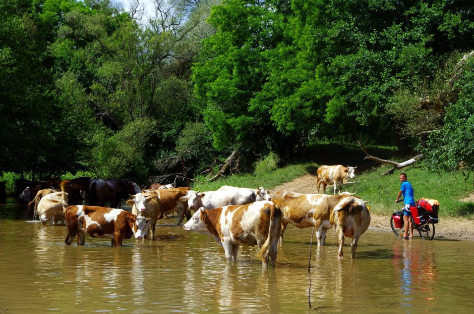Wodopój w Rumunii