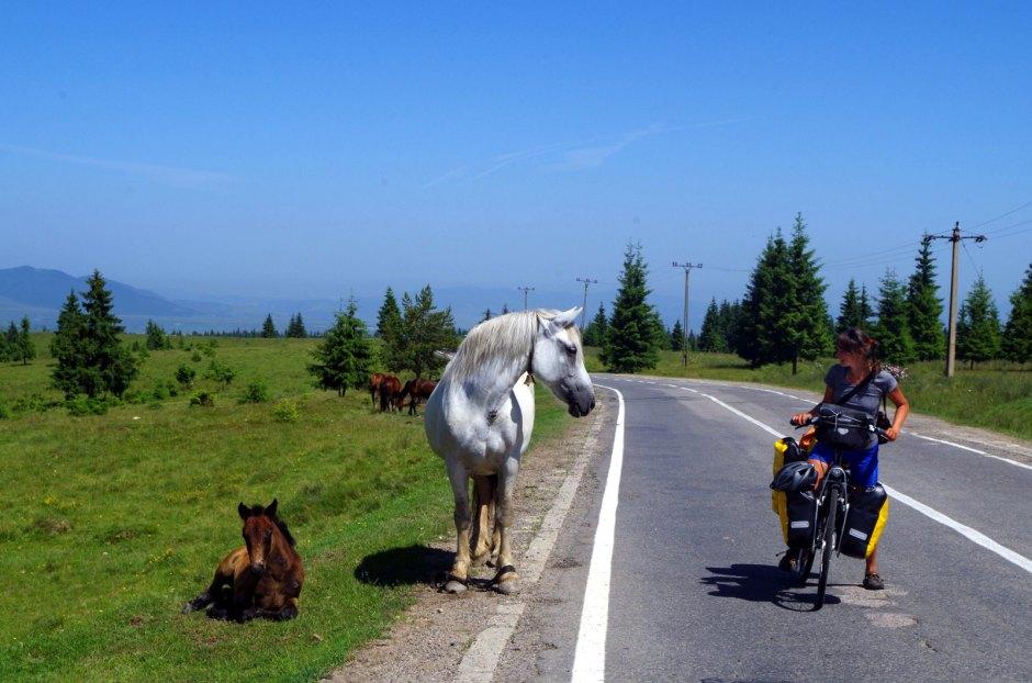 Rumunia rowerem - spotkanie z koniem