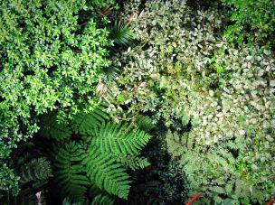 Kostaryka, przyroda, Monteverde - las chmurowy