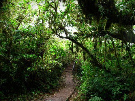 Kostaryka, Monteverde - las chmurowy, przyroda