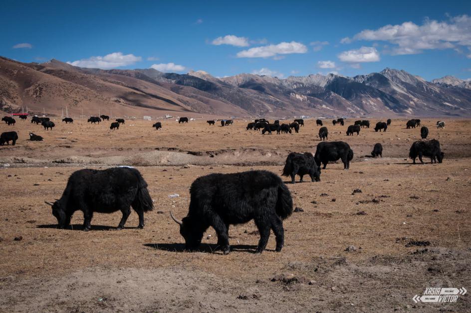 Litang w chińskim Tybecie, jaki