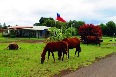 Na lotnisku Rapa Nui beztrosko pasa się konie. (Fot. Ania Napieralska)