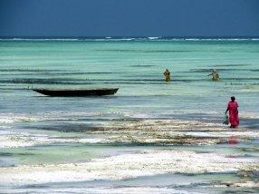 Zanzibar, Unguja, Paje, kobiety zbierające wodorosty