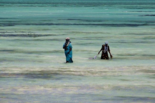 Zanzibar, plaża w Paje