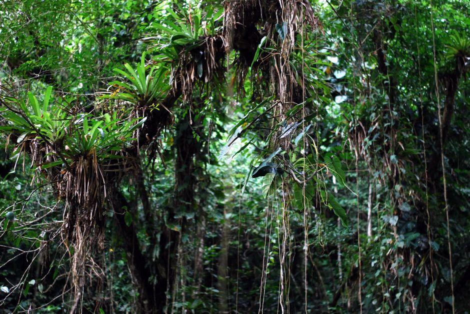 Kolumbia, selwa w górach Sierra Nevada