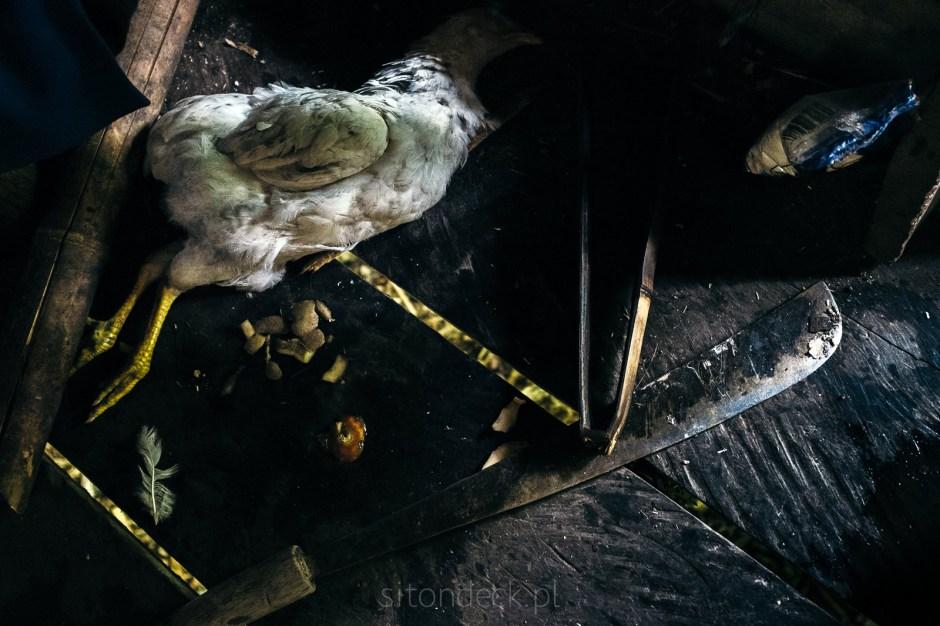 Indonezja, Mentawaje, martwa kura