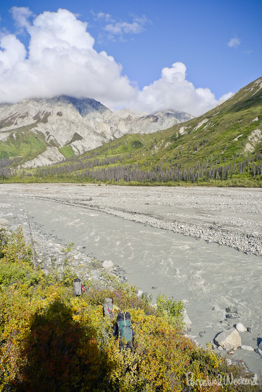 alaska fall yellow leaves, goat creek, wrangell st elias, AK