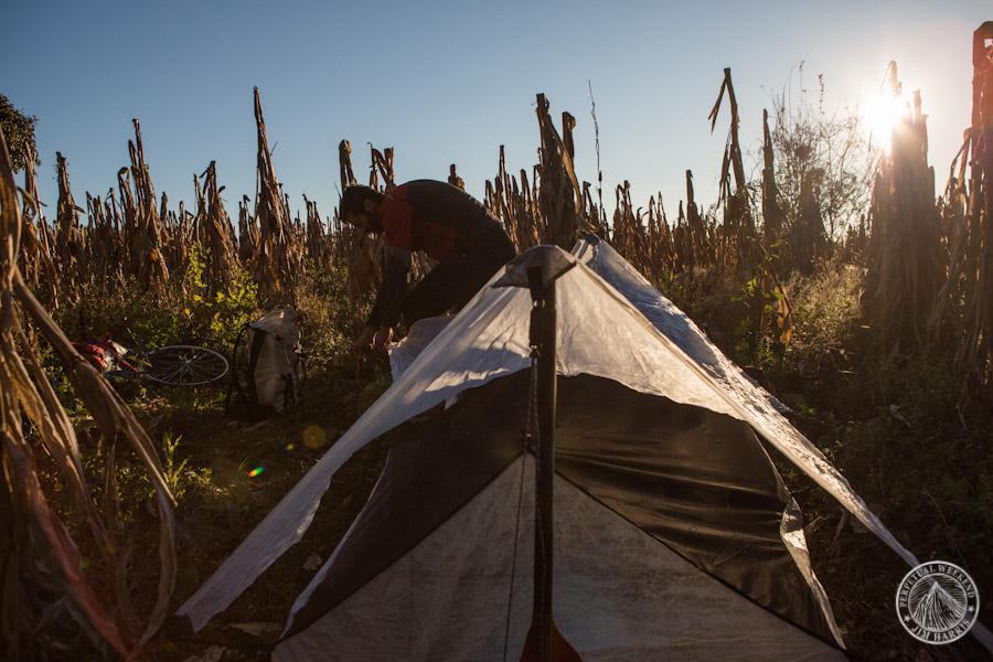 Sunrise in a corn field campsite