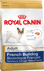 french-bulldog-adult