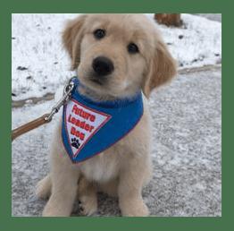 Cachorro de perro guía llevando bandana en el cuello con el lema 'Futuro Perro Guía' en inglés