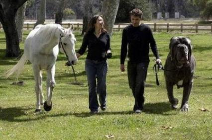 raza de perro gigante como caballo
