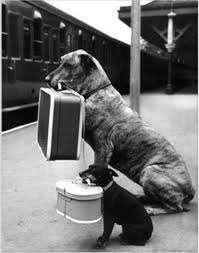 mascotas en los viajes