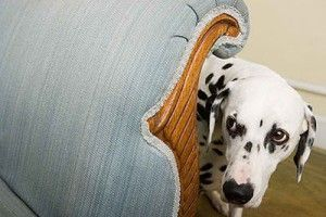 Cómo acabar con el miedo en los perros