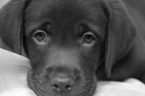Salud y Mascotas1