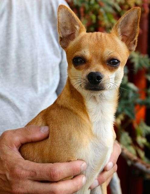 l grupo de investigación de Psicología Clínica y de la Salud de la Universidad de Sevilla señala que los perros ayudan motivando a las personas a no aislarse y salir a la calle.