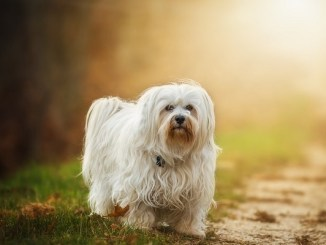 Perfumes para Perros: Cosas a Tener en Cuenta
