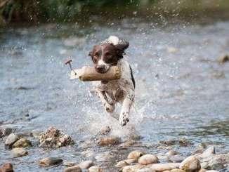 Cómo Elegir Parques para Pasear con tu Perro