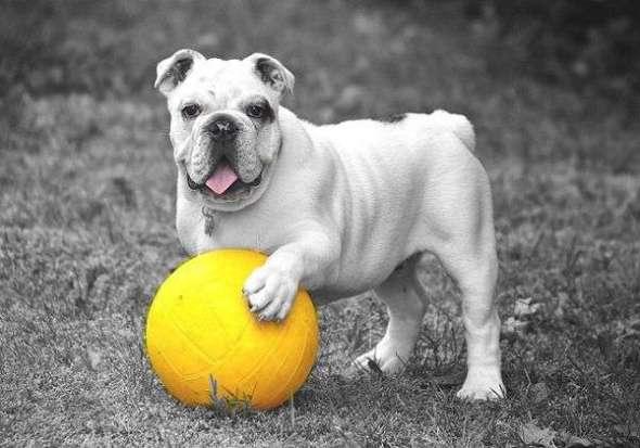 Cómo Evitar que Tu Perro sea Agresivo