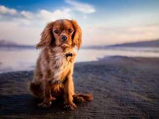 Consejos para ir a la Playa con el Perro