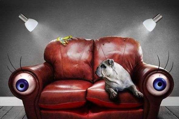 Cinco Errores que Cometes con Tu Perro