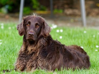6 Síntomas de Envejecimiento en los Perros