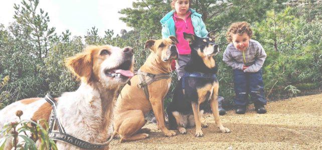 vacaciones con niños y perros