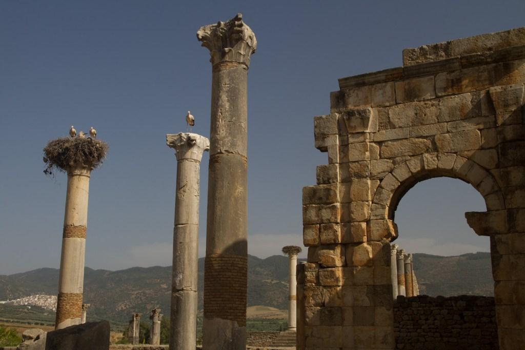 Cigüeñas en el templo de Júpiter - Volubilis, Marruecos
