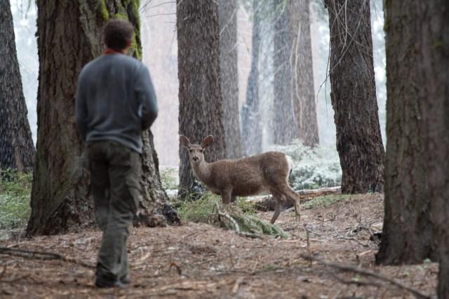 Un ciervo observa con atención a un humano que se aproxima en el Parque Nacional de las Secuoyas, EE.UU.