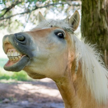 Being Content and Why You Shouldn't Look a Gift Horse in the Mouth