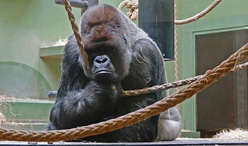 ontsnappen in de dierentuin na apers