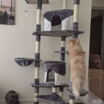 Best Cat Trees And Towers For Persian Cats Persian Cat Corner