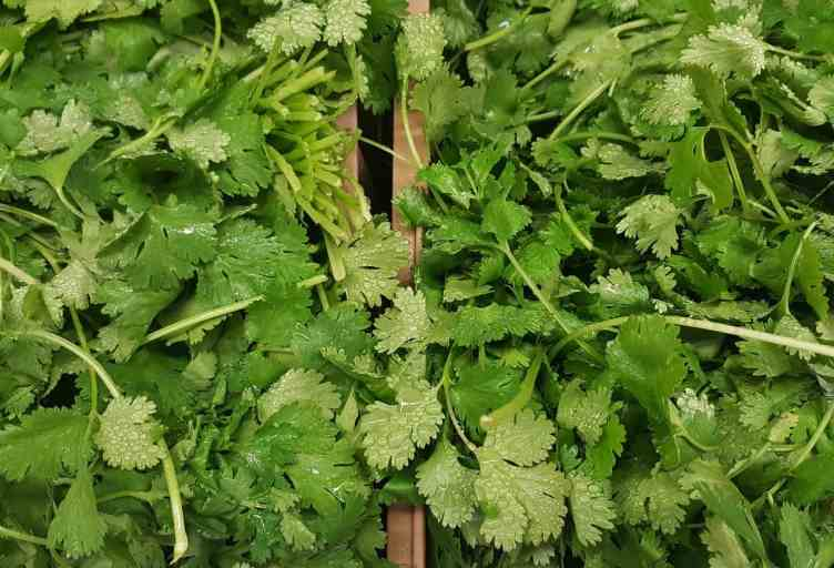 Cilantro is a common herb in the persian cuisine
