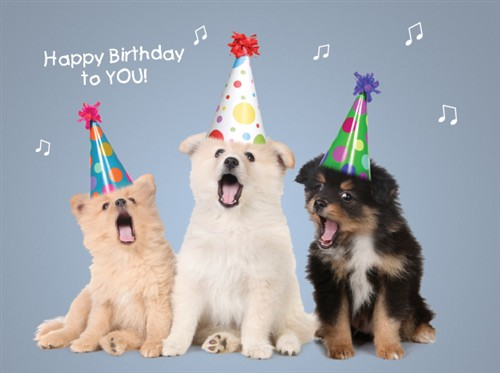 1331 BD Dogs Sing Happy Birthday