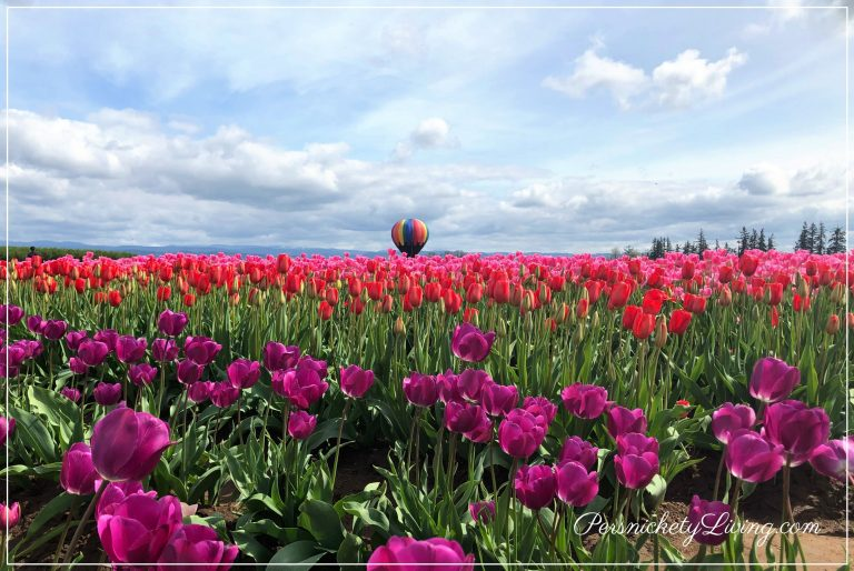 Field of Flowers at Portland Tulip Festival