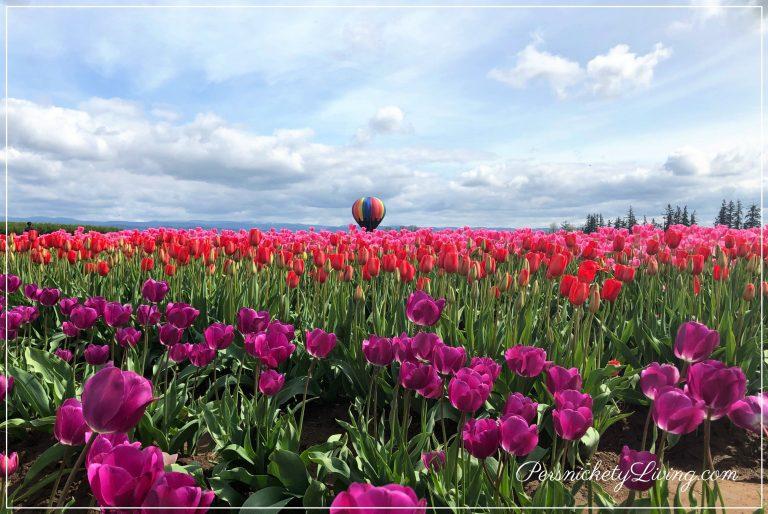 Field of Flowers at Portland Tulip Festival