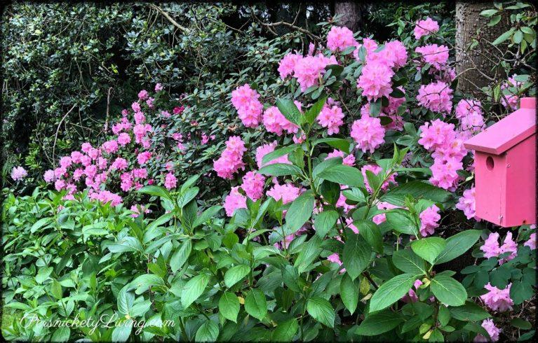 Pretty Pinks