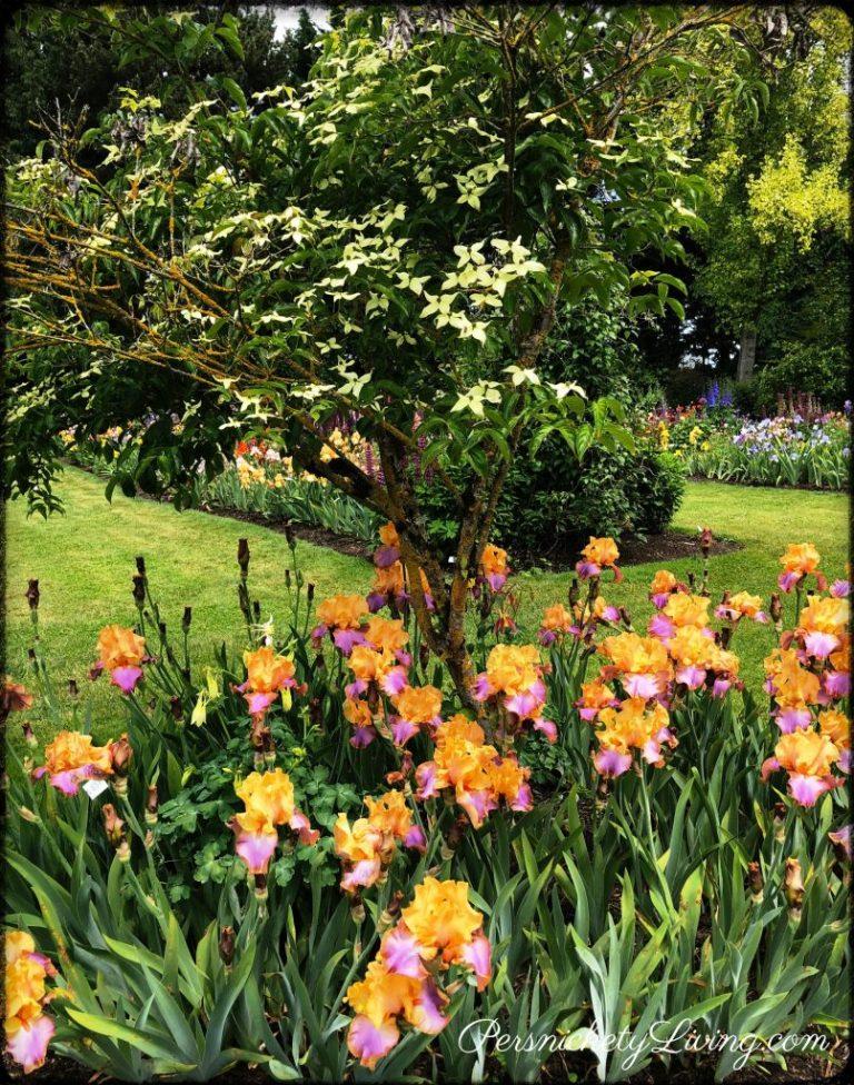 Trees Irises