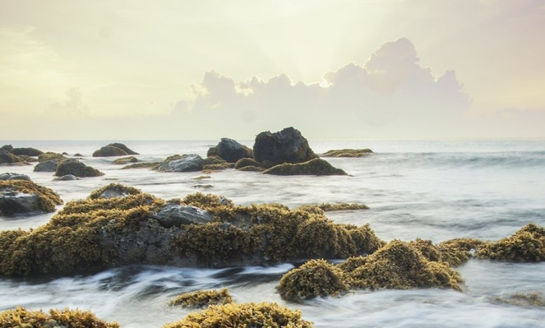 Photo of Algae and seaweed on the rise as a healthy fish and meat substitute