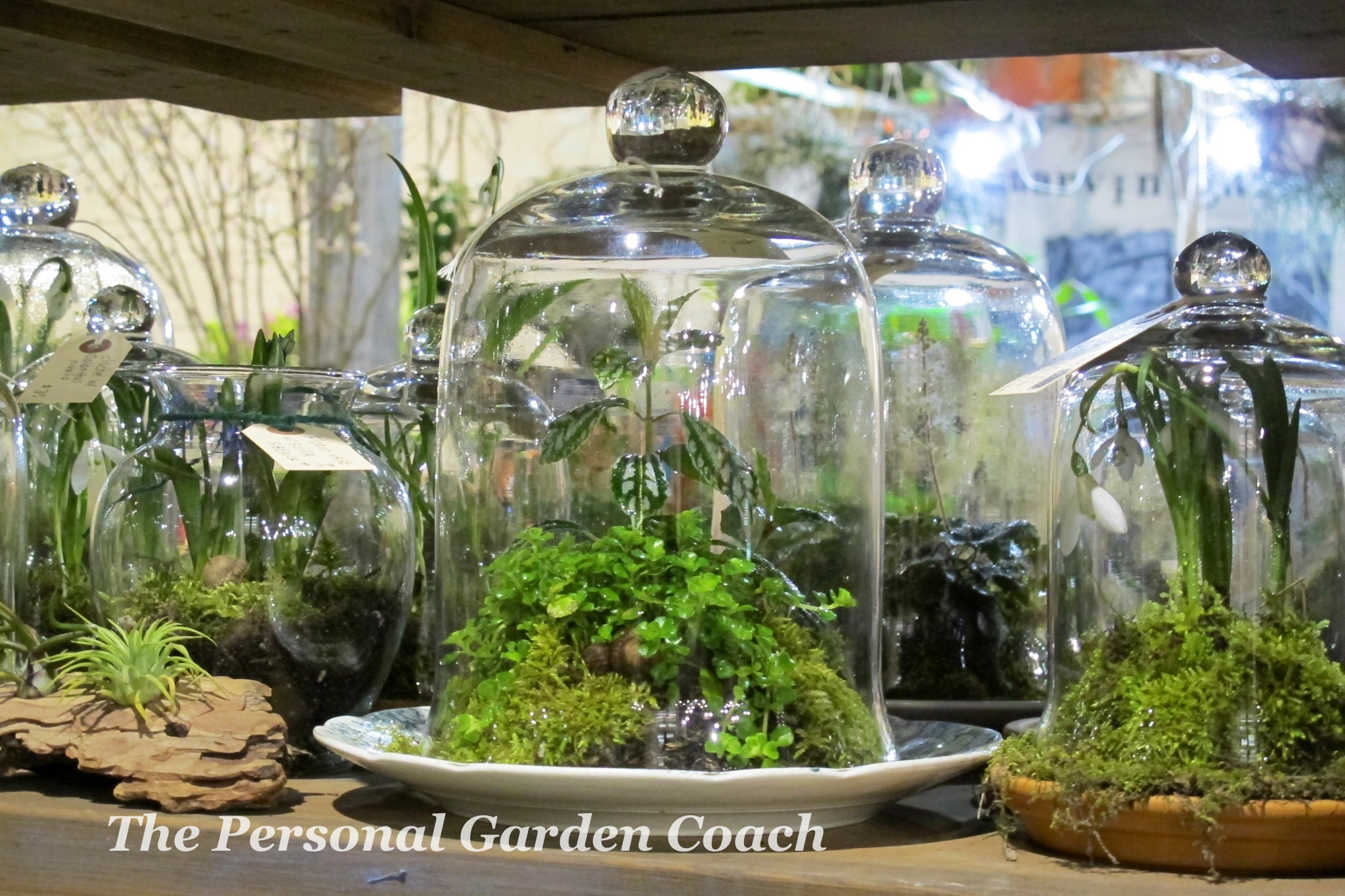 String Gardens And Terrariums Win Crowds At Philly Flower Show